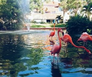 flamingo, travel, and punta cana image