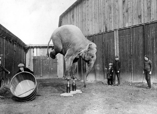 elephant, circus, and black and white image