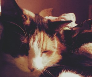 chat, cute, and mignonne douce image