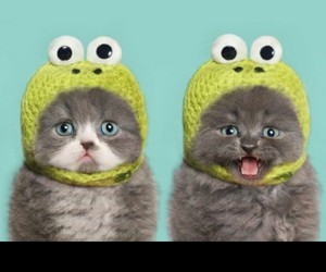 cats, hats, and frogs image
