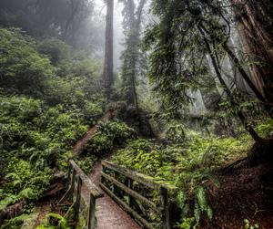 path, bridge, and fog image