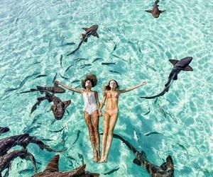 summer, ocean, and shark image