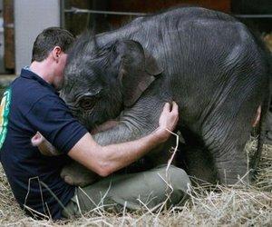 elephant, animal, and hug image