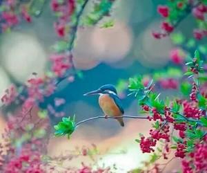 bird, spring, and tree image