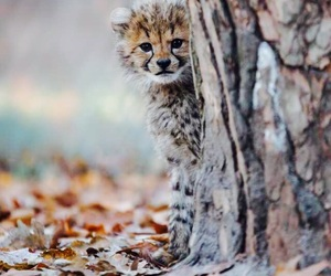 animals, fluffy, and leopard cub image