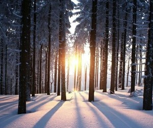 snow, sun, and love image