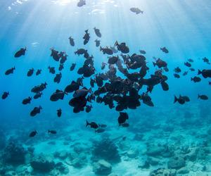 bali, fish, and nature image
