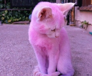 cat, pink, and kitty image