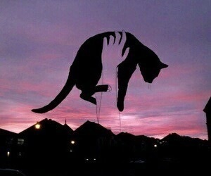 cat, sky, and pink image