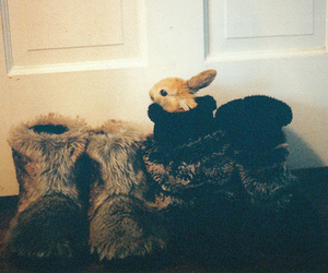 boots, bunny, and rabbit image