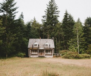 forest house and nature image