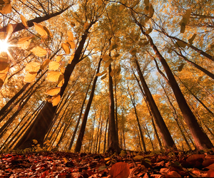 autumn, photography, and tree image