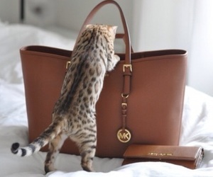 cat, bag, and Michael Kors image