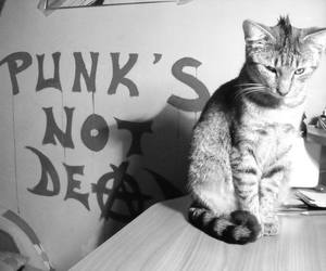 cat, punk, and punks not dead image