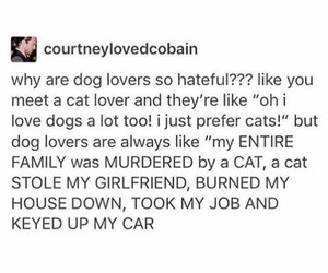 hilarious, tumblr, and cat lover image