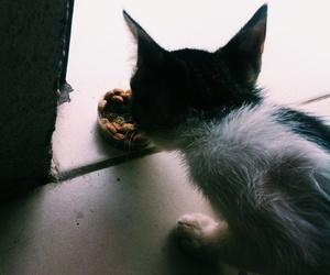 animal, cat, and gatinho image