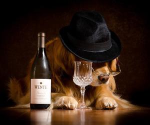 photo art and dog drunk. image