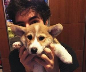 boy, beautiful, and dog image