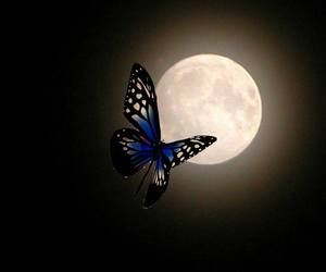 beautiful, butterfly, and beauty image