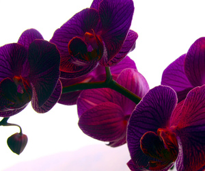 flowers, orchid, and purple image
