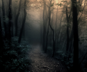 forest, woods, and fog image