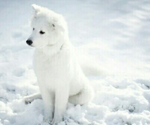 dog, snow, and white image