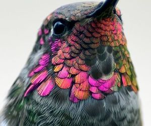 colors, beauty, and bird image