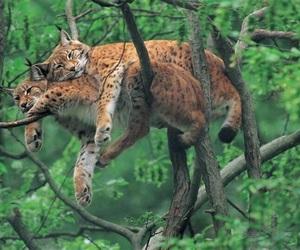 animal, cat, and tree image
