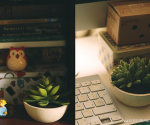 danbo, decoration, and succulent image
