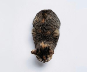 cat, minimalism, and cute image