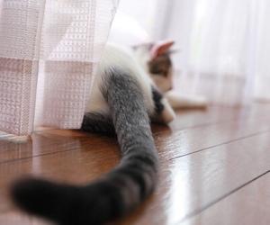 cat, tumblr, and soft grunge image