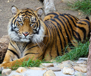 animal, california, and feline image