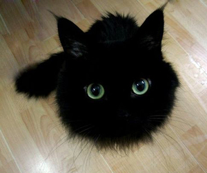 adorable, aww, and green eyes image