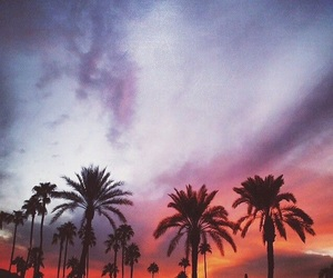 palm trees, summer, and clouds image