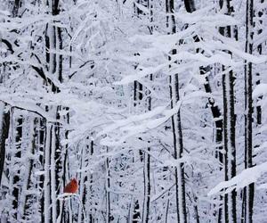 winter, snow, and bird image