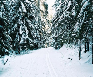 cold, finland, and forest image