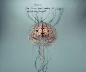brain and quote image
