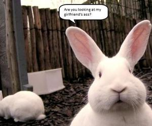 bunny and funny image
