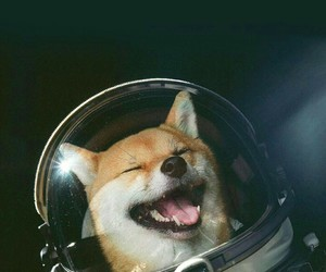 dog, astronaut, and space image