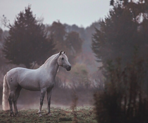 beautiful, nature, and horse image