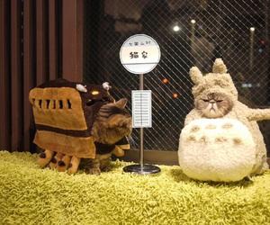cat, totoro, and cute image