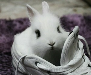 bunny, little, and rabbit image