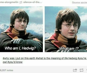 harry potter, funny, and hedwig image