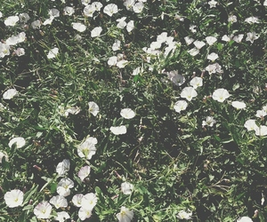 flowers and hipster image