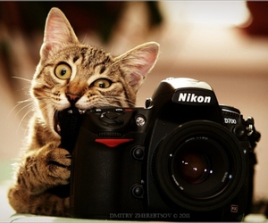 camera, cat, and photography image