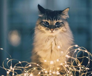 cat and lights image