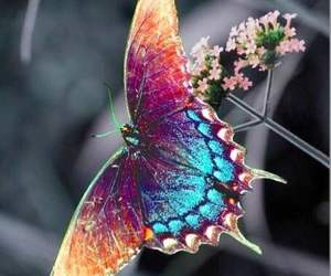 animal, butterfly, and beautiful image