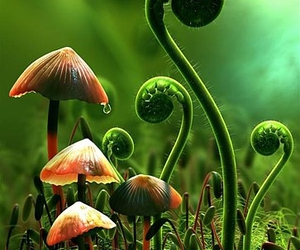 mushroom, nature, and green image