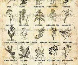 herbs, magical, and witchcraft image