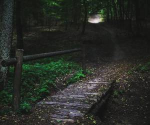 forest, magick, and mist image